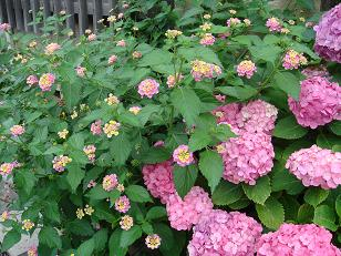 大きい花・小さい花.JPG